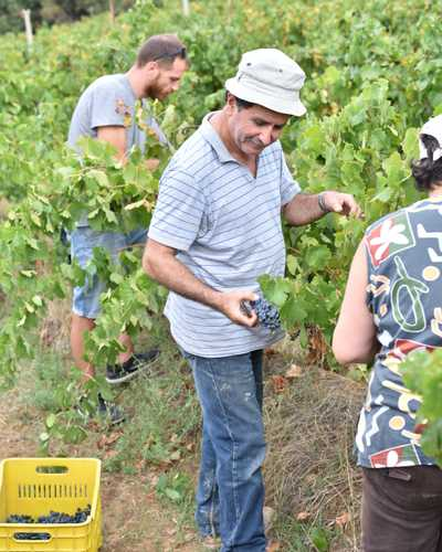 Producer sinadinakis working in the harvest